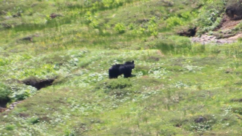 乗鞍岳で熊と遭遇!