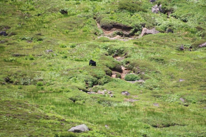 反対側の斜面に熊を発見!